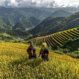 producteurs-artisans-du-monde-riz