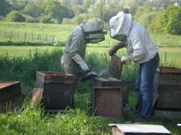 Les ruches de Verdeuil