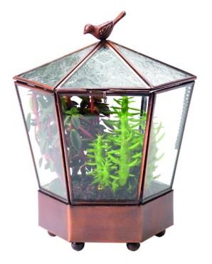 terrarium-jardin-adm